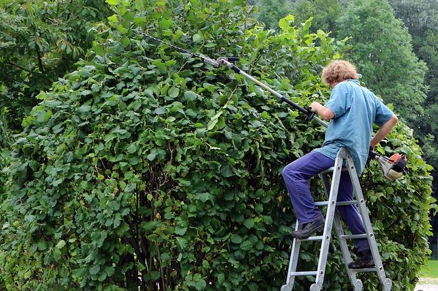 3 tips voor het onderhouden van je tuin