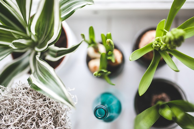 Goedkope kunstplanten