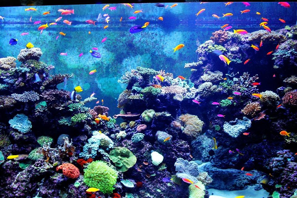 Wat moet je weten als je een doktersvis in je aquarium wil hebben?