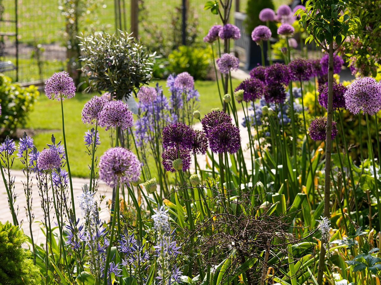Tuin opknappen: doe het in het najaar!