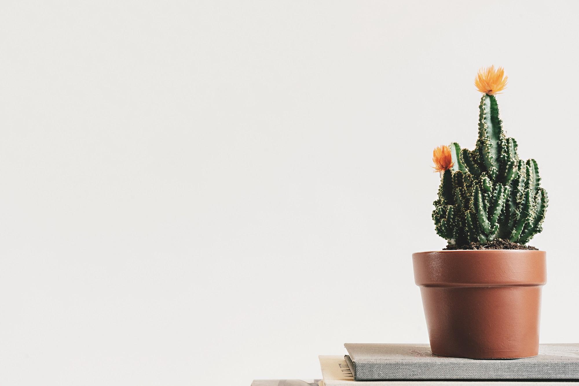 Kantoorplanten voor de beste sfeer op jouw werkplek