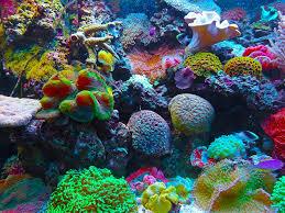 Van zoetwater naar een zoutwater aquarium