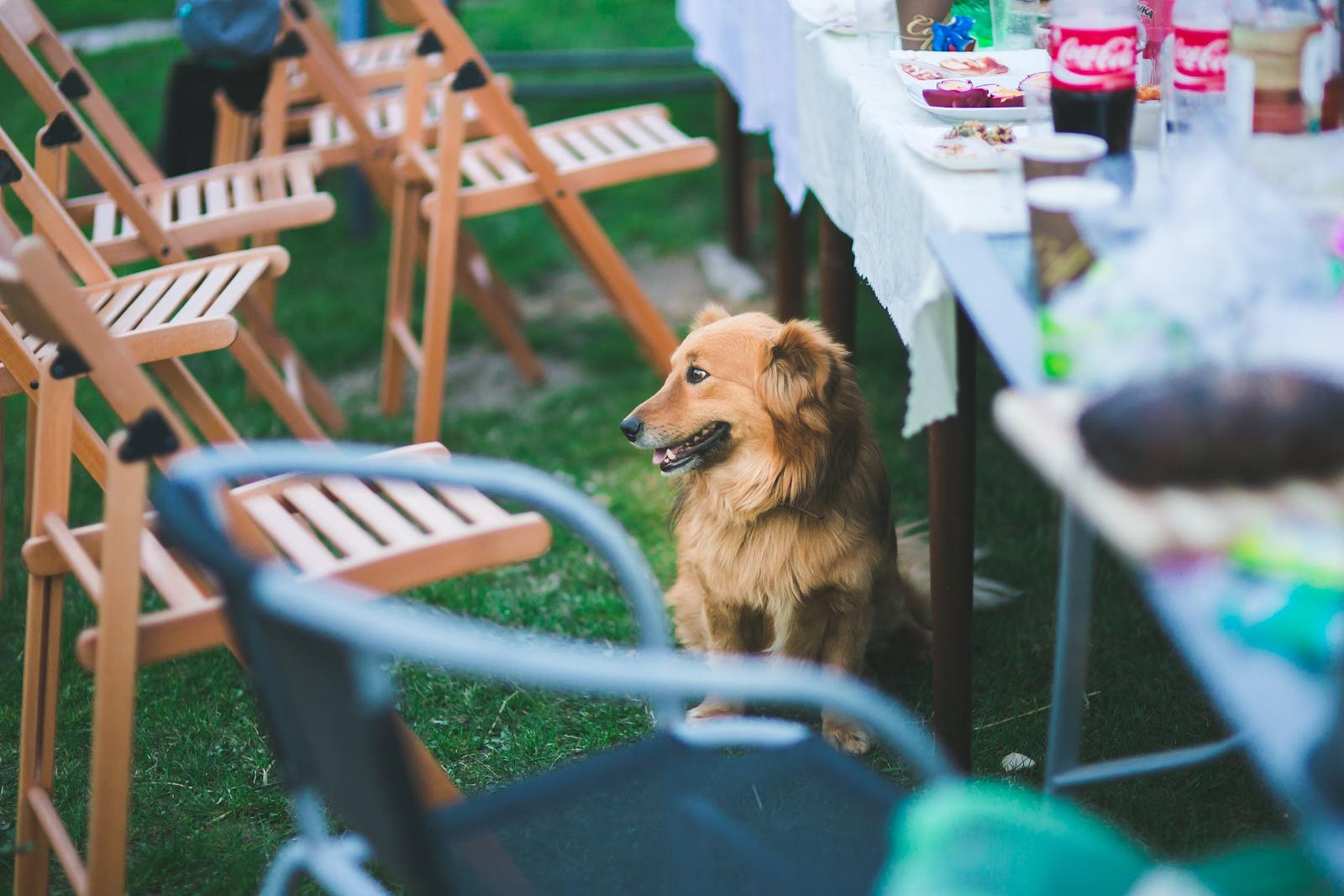 3 Barbecue tips voor het perfecte tuinfeestje