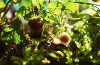 Zo houd jij slakken uit je tuin