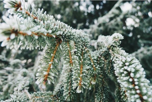 Tips voor een mooie wintertuin