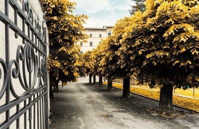 5 trends die inrichters van buitenruimtes moeten weten