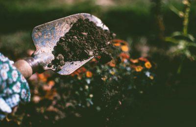 Laat uw tuin bloeien als voorheen met behulp van een hovenier