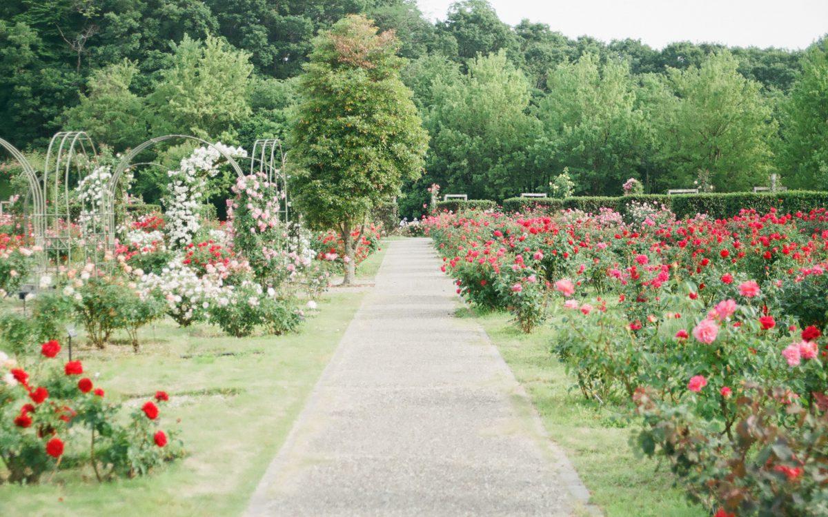 Tips voor een mooie tuin