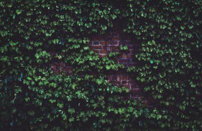 Hoe gebruik je een klimplant in het ontwerp van je tuin?