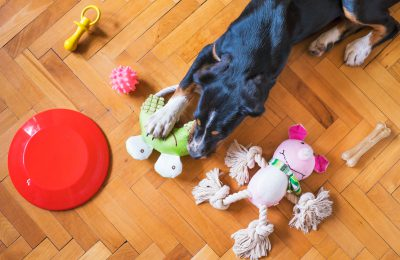 De leukste hondenspeeltjes voor in huis